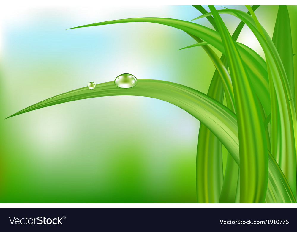 Green grass and water drops vector | Price: 1 Credit (USD $1)