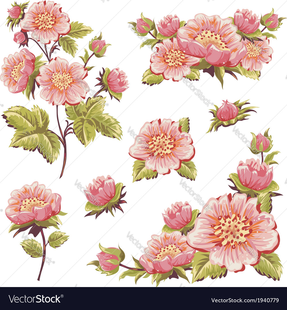 Gentle floral set of flower elements isolated vector | Price: 1 Credit (USD $1)