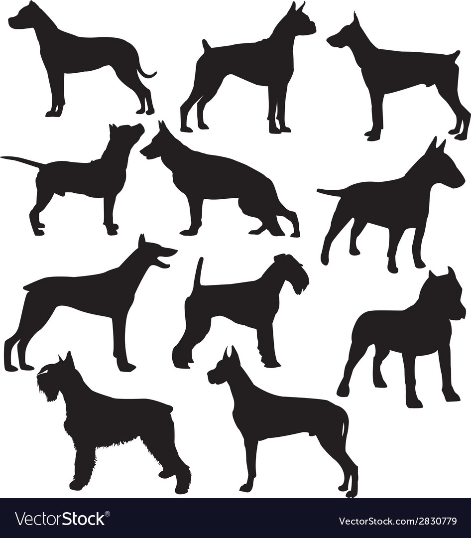Set of sillhouttes of standing working dogs vector
