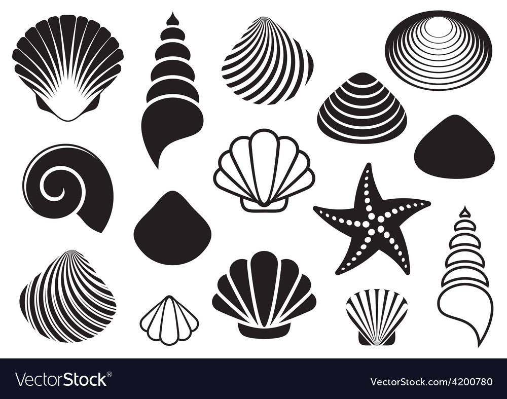 Sea shells and starfish vector | Price: 1 Credit (USD $1)