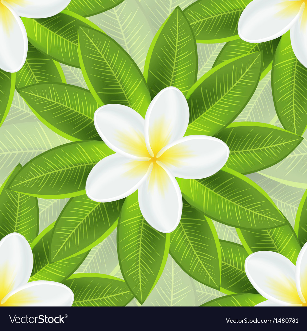 Spring ecological background with beautiful white vector | Price: 1 Credit (USD $1)