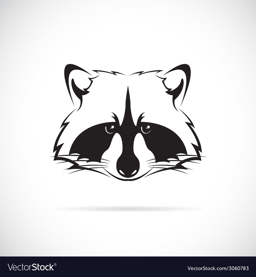 Raccoons vector | Price: 1 Credit (USD $1)