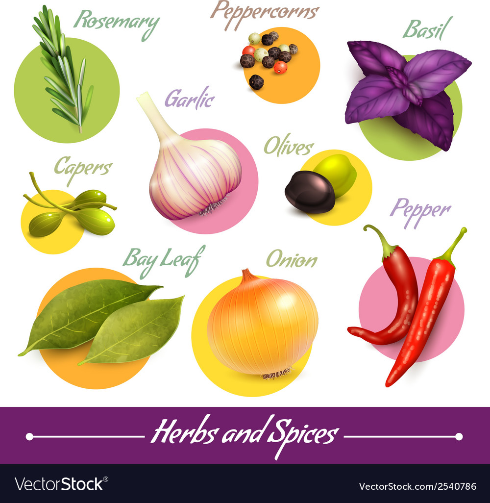 Herbs and spices set vector | Price: 1 Credit (USD $1)
