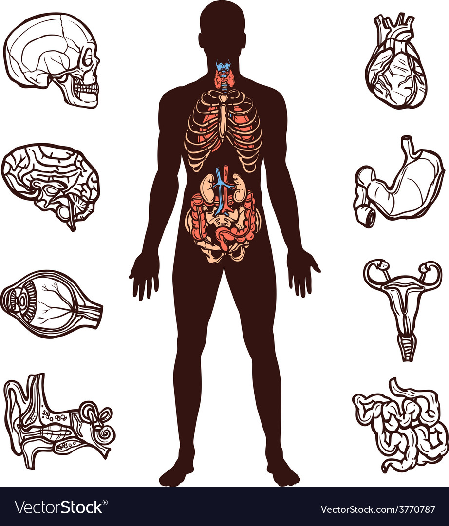 Human anatomy set vector | Price: 1 Credit (USD $1)