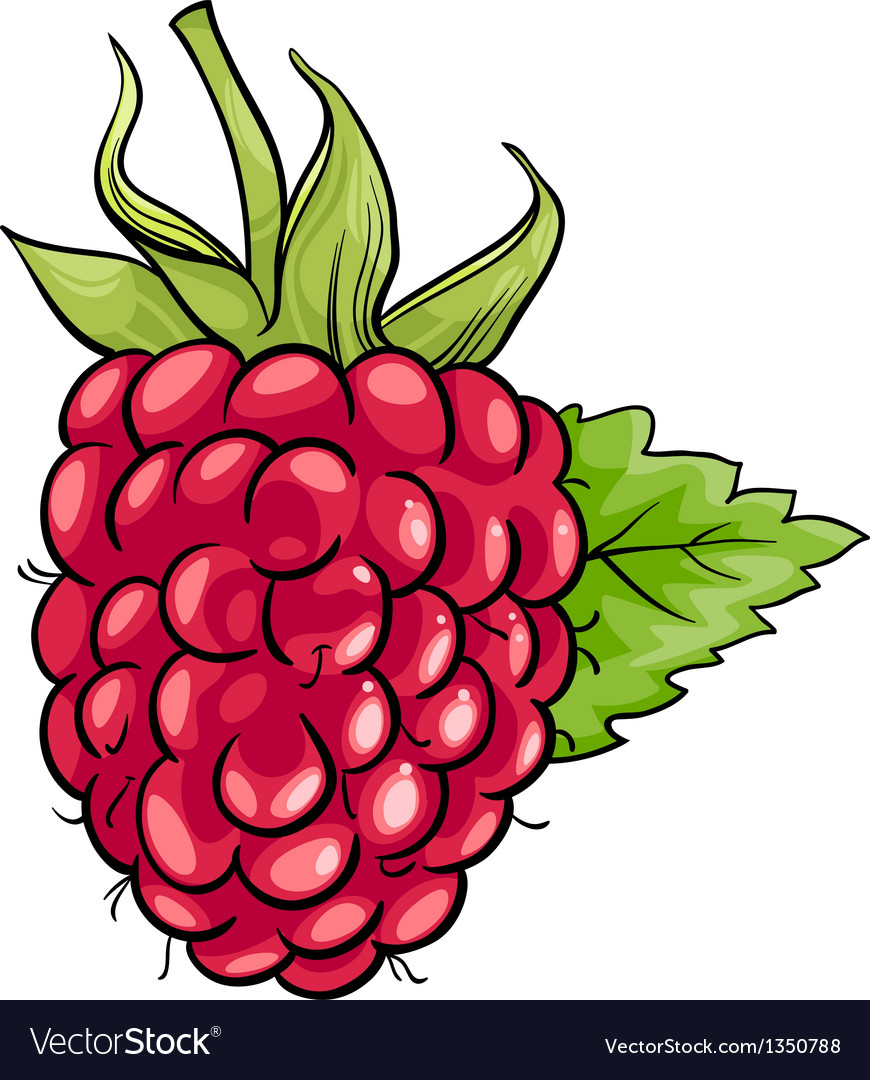 Raspberry fruit cartoon vector | Price: 1 Credit (USD $1)