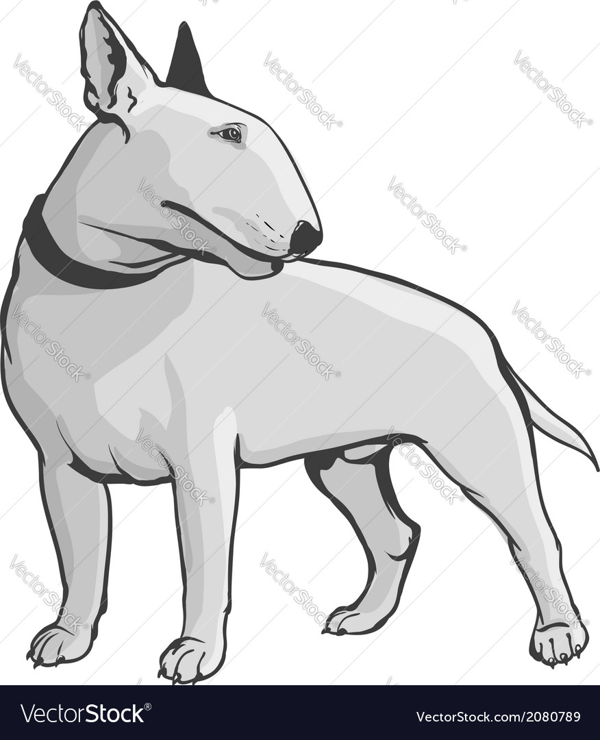 Bull terrier vector   Price: 1 Credit (USD $1)