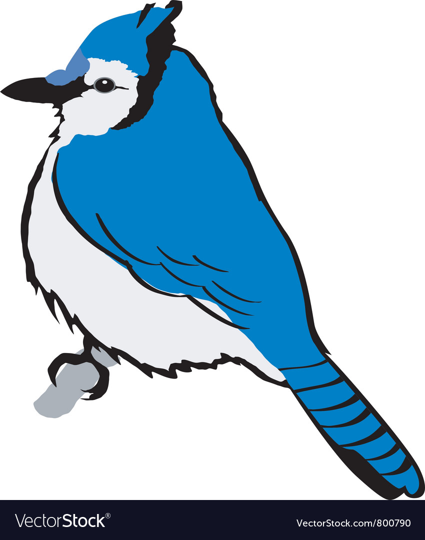 Blue jay vector | Price: 1 Credit (USD $1)