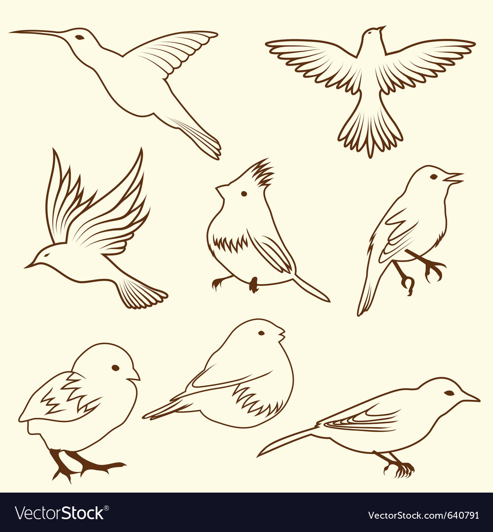 Set of differnet sketch bird for design use vector | Price: 1 Credit (USD $1)