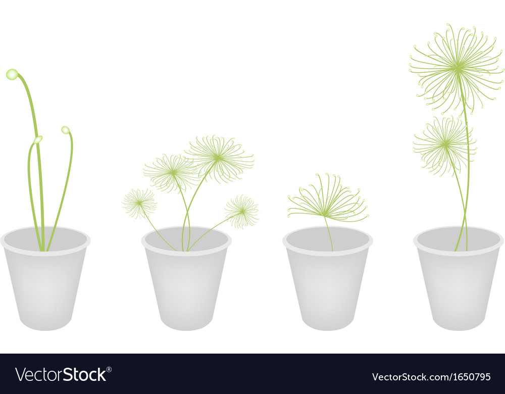Cyperus papyrus plants in a flower pot vector | Price: 1 Credit (USD $1)
