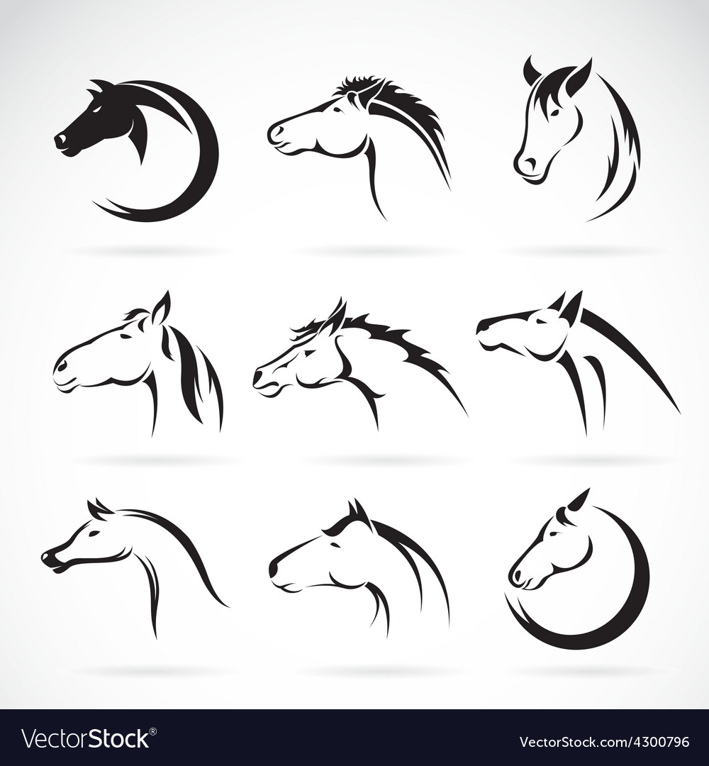 Group of horse head design vector | Price: 1 Credit (USD $1)