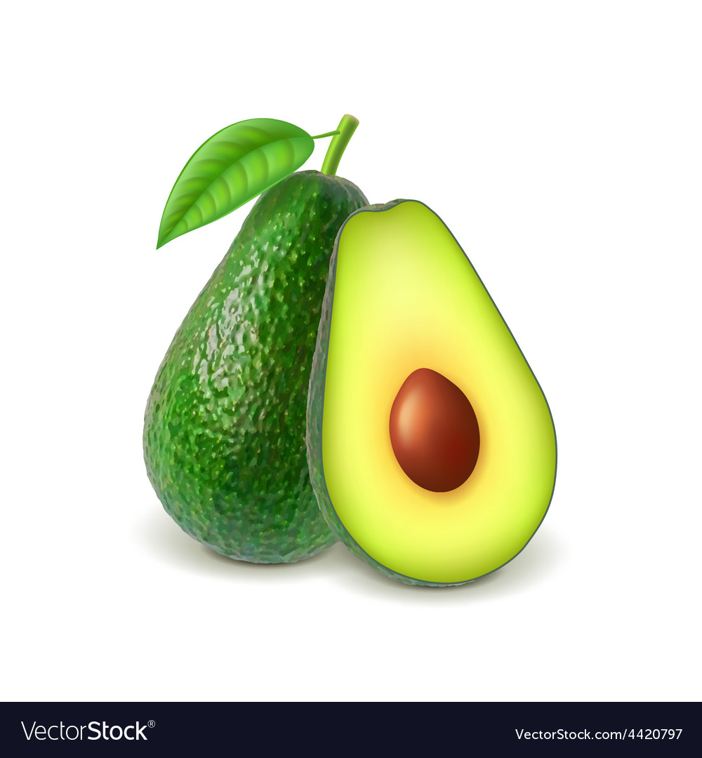 Avocado and slice isolated on white vector | Price: 3 Credit (USD $3)