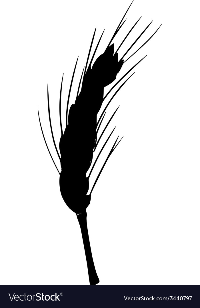 Silhouette of ear of wheat vector | Price: 1 Credit (USD $1)