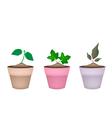 Three ornamental trees in ceramic flower pots vector