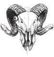 Ram skull vector