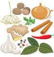 Spices and vegetables for cooking vector