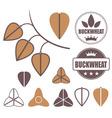 Buckwheat vector