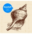 Seashell hand drawn sketch vector