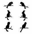 Parrots silhouettes vector