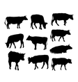 Cow set black silhouette on white background vector