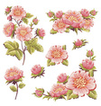 Gentle floral set of flower elements isolated vector