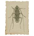 Beetle - cockroach vector