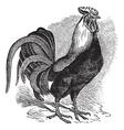 Rooster vintage engraving vector