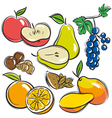 Set of fruits apple pear mango orange vector