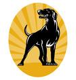 Retriever dog woodcut style vector