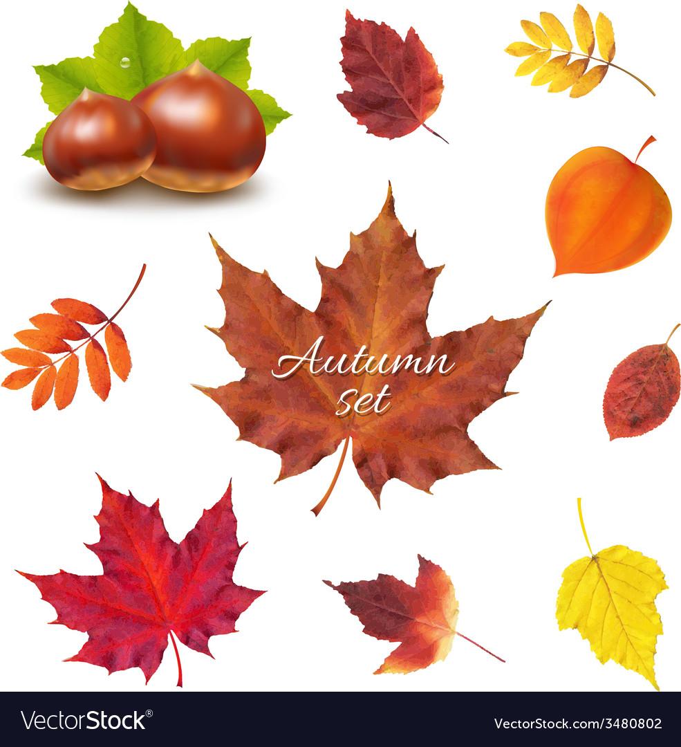 Autumn set vector | Price: 1 Credit (USD $1)