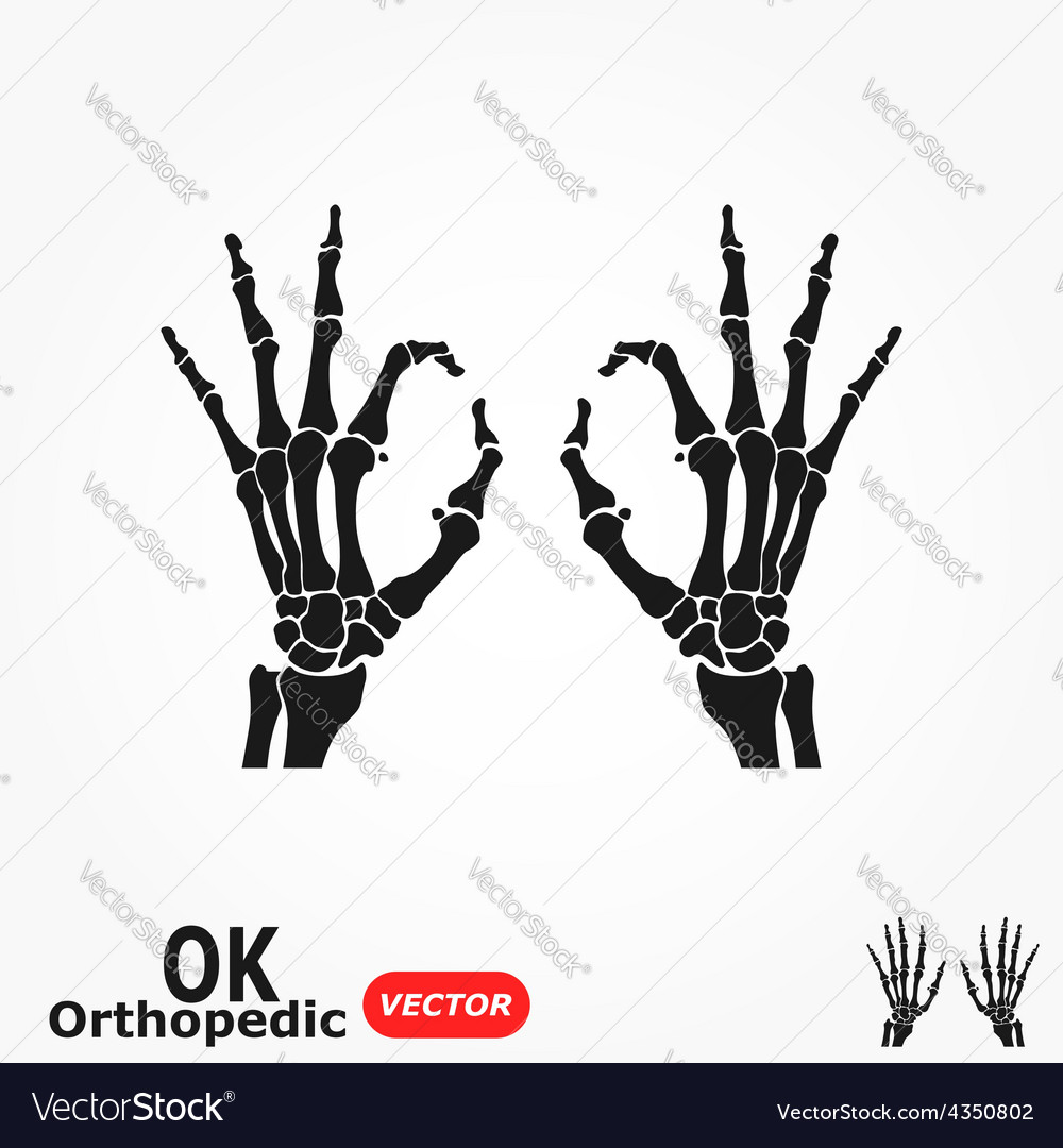 Ok orthopedic vector | Price: 1 Credit (USD $1)