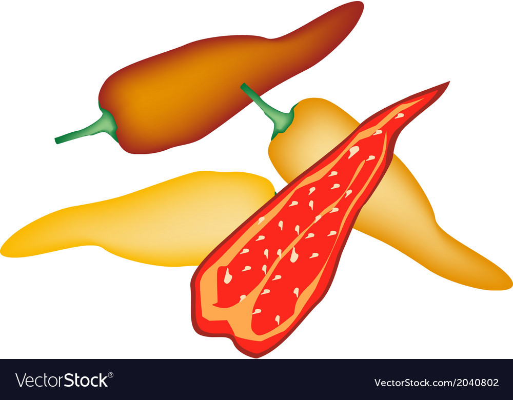 Red and yellow poblano chili on white background vector | Price: 1 Credit (USD $1)
