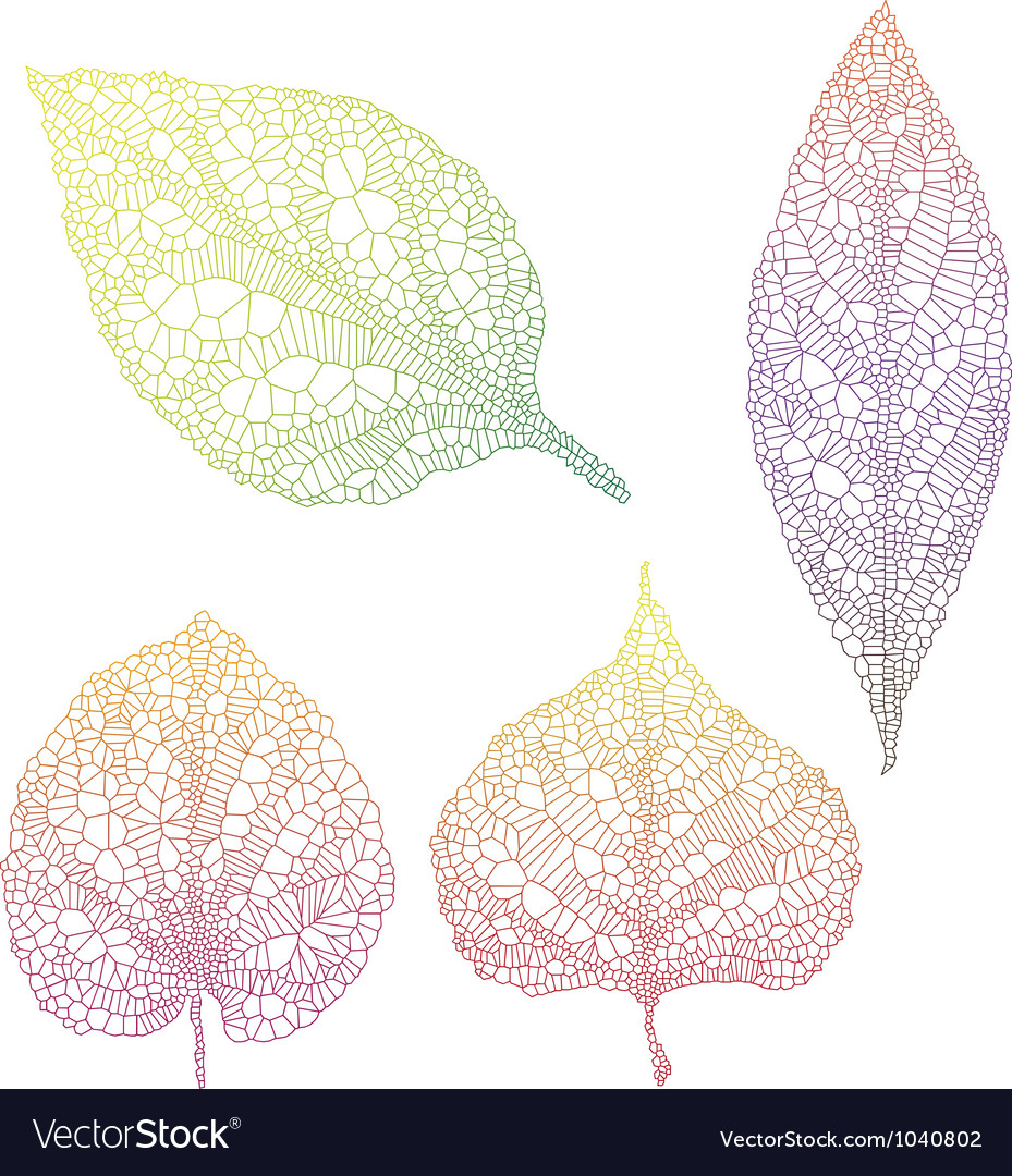 Vein leaves vector | Price: 1 Credit (USD $1)
