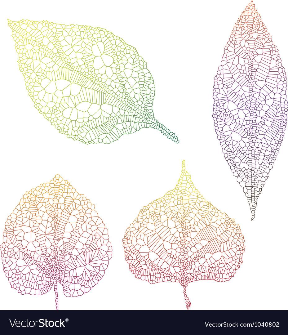 Vein leaves vector | Price: 1 Credit (USD $1)