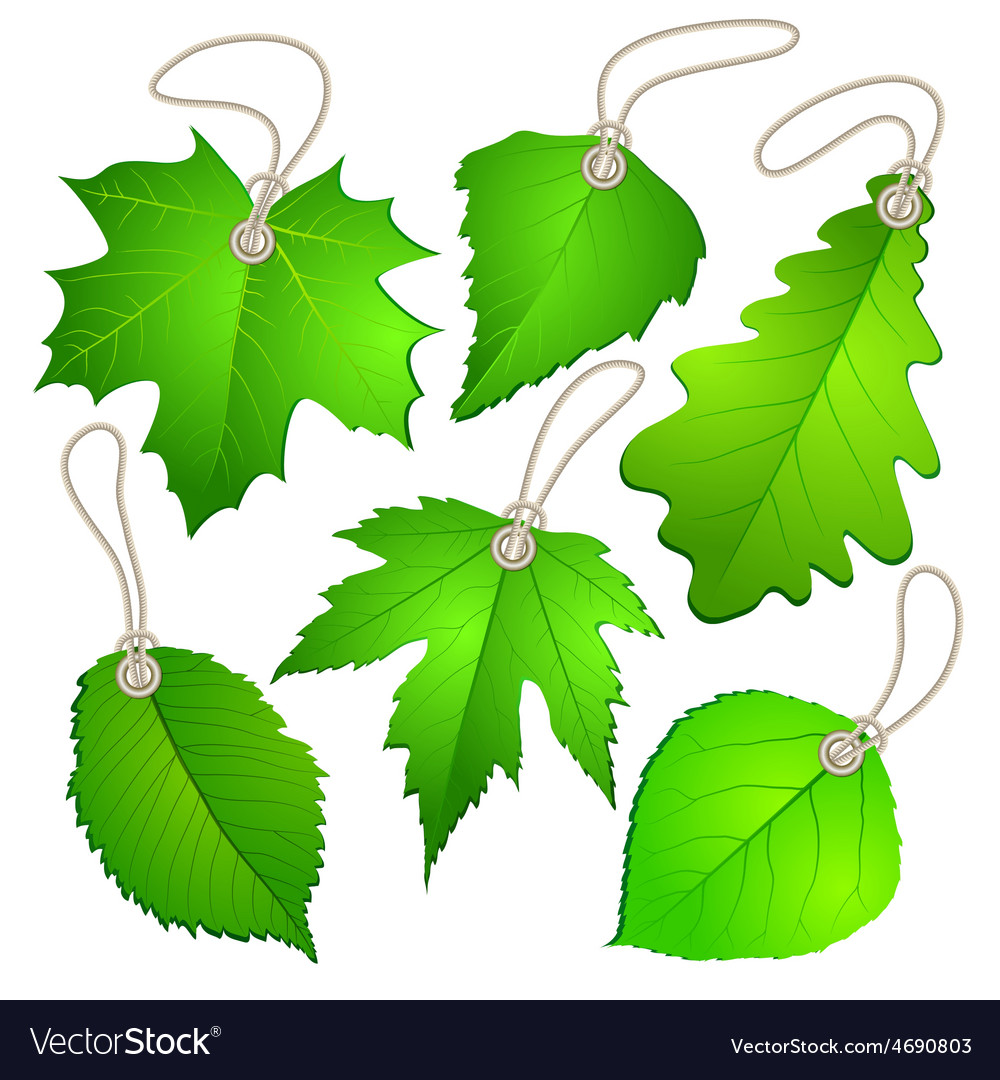 Hanging tags with green leaves vector | Price: 1 Credit (USD $1)