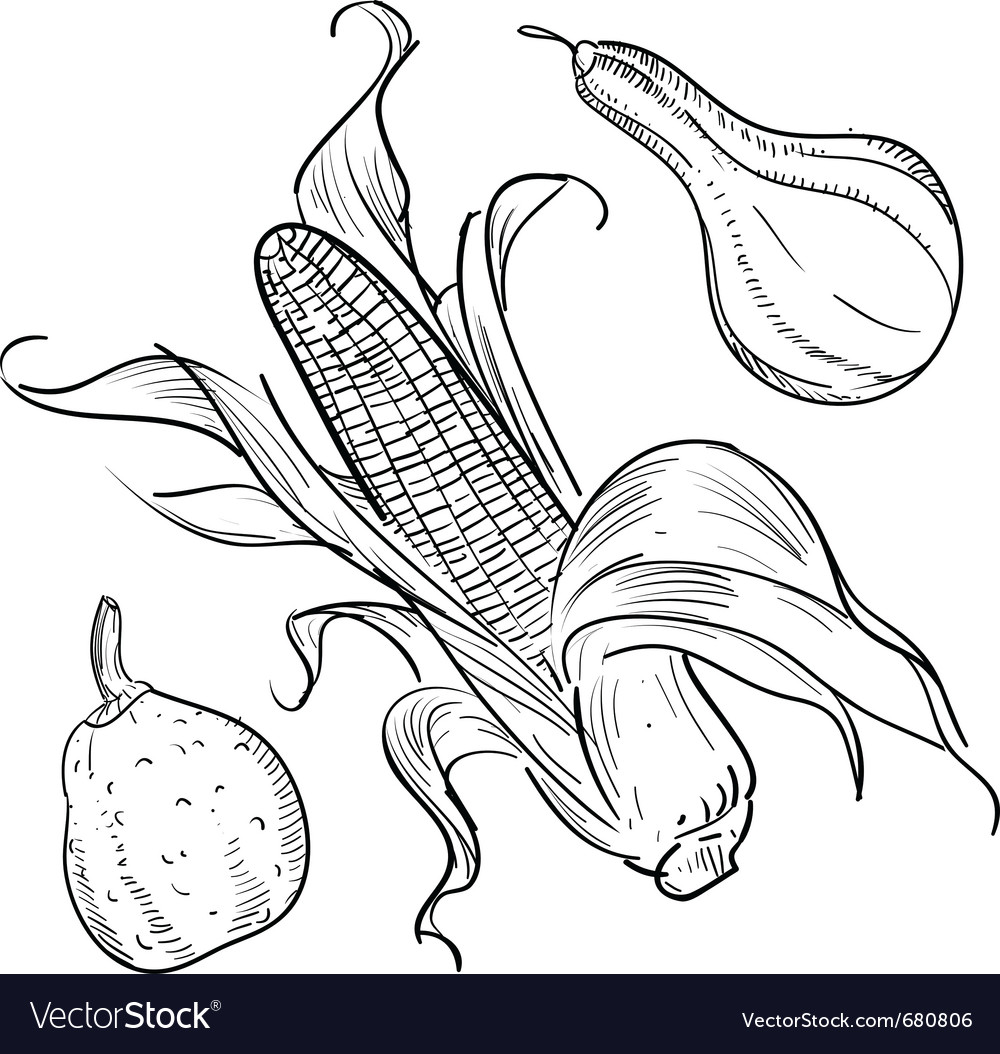Corn sketch vector | Price: 1 Credit (USD $1)