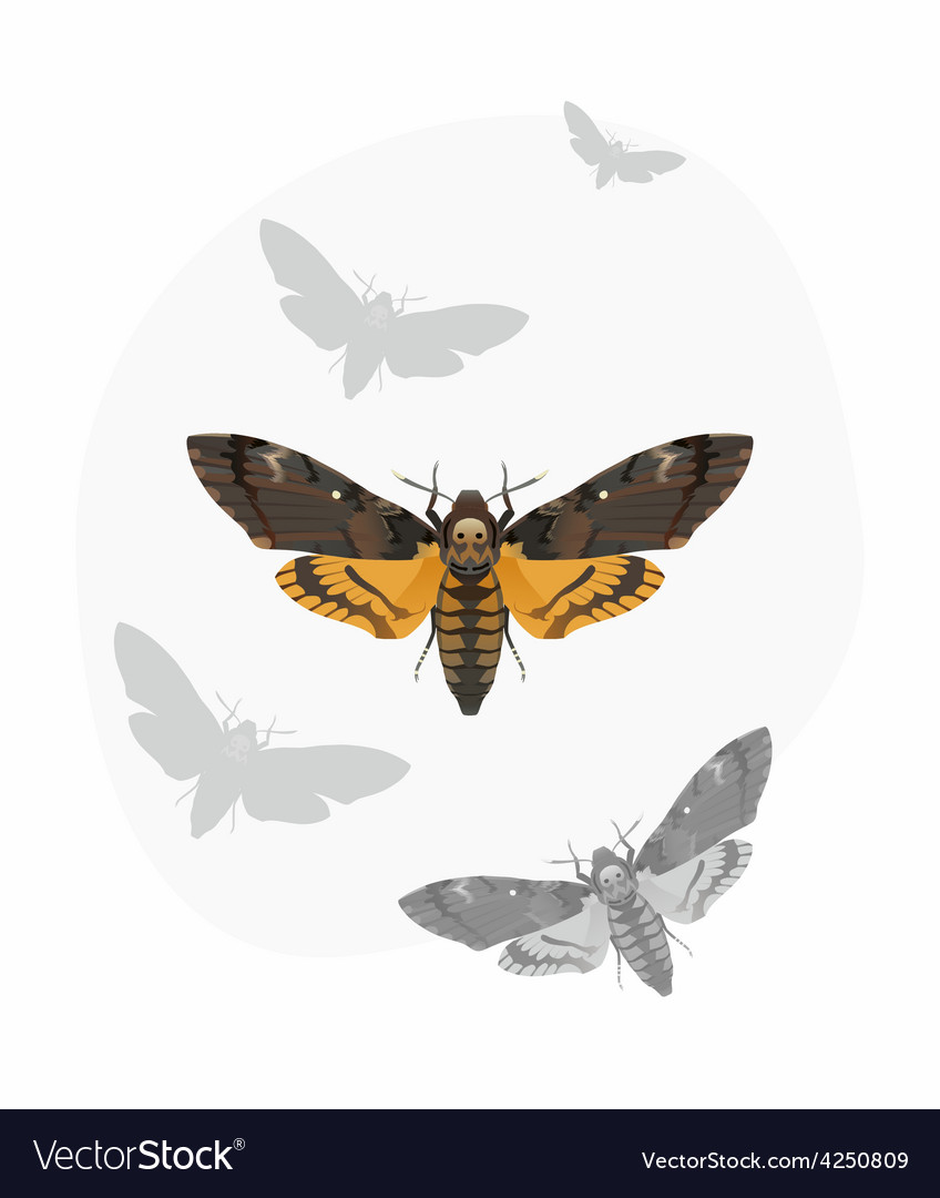 Butterfly deaths head hawk moth vector | Price: 1 Credit (USD $1)