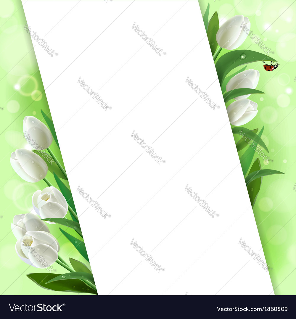 Greeting card with tulips vector | Price: 1 Credit (USD $1)