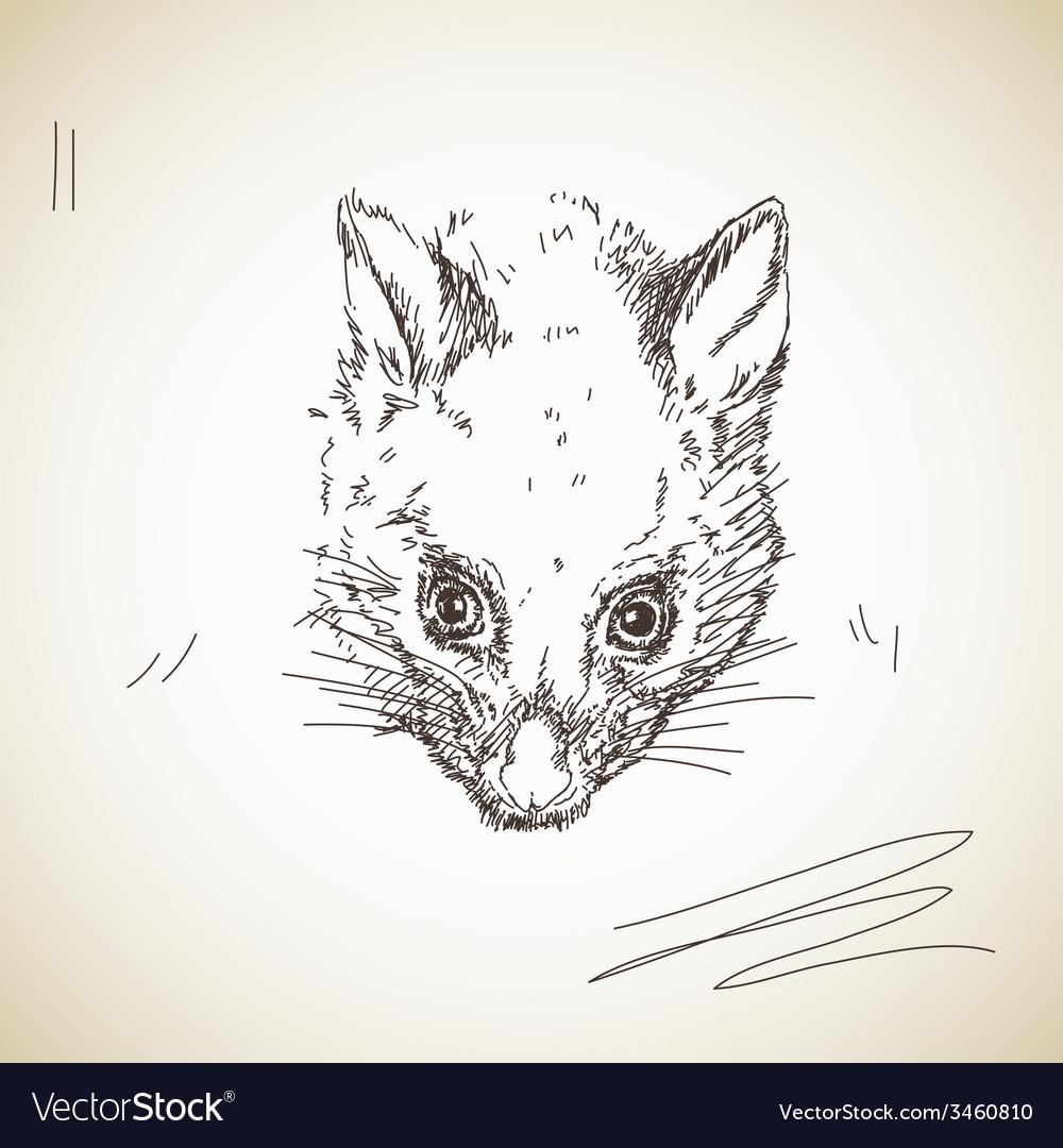 Possum muzzle vector | Price: 1 Credit (USD $1)