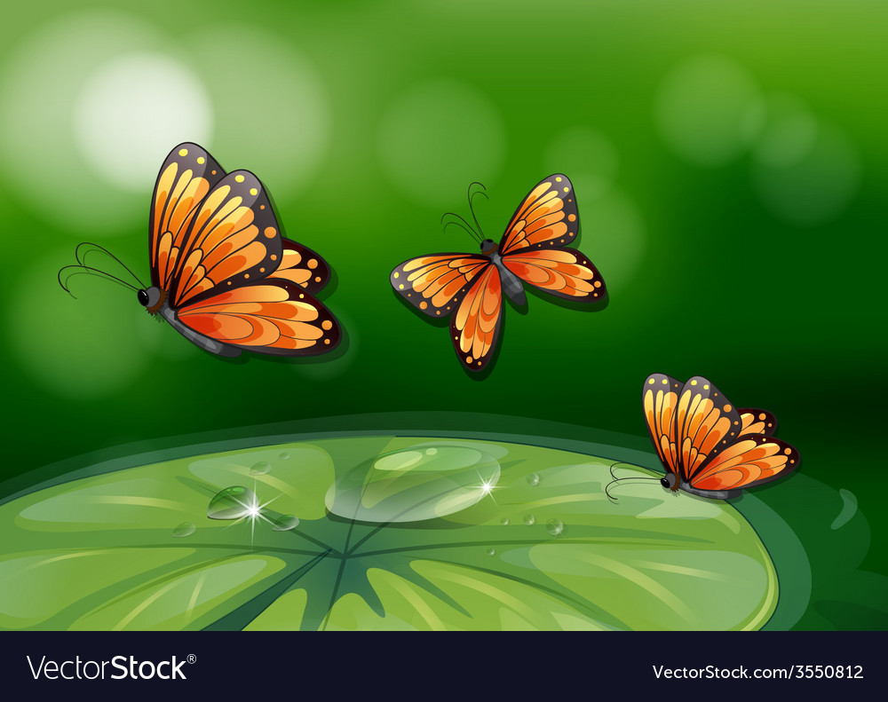 Butterflies and water lily vector | Price: 3 Credit (USD $3)