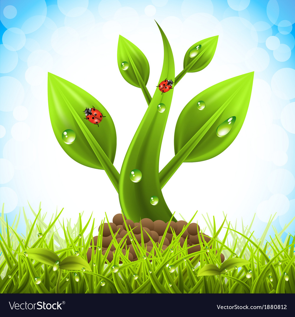 Plant vector | Price: 3 Credit (USD $3)