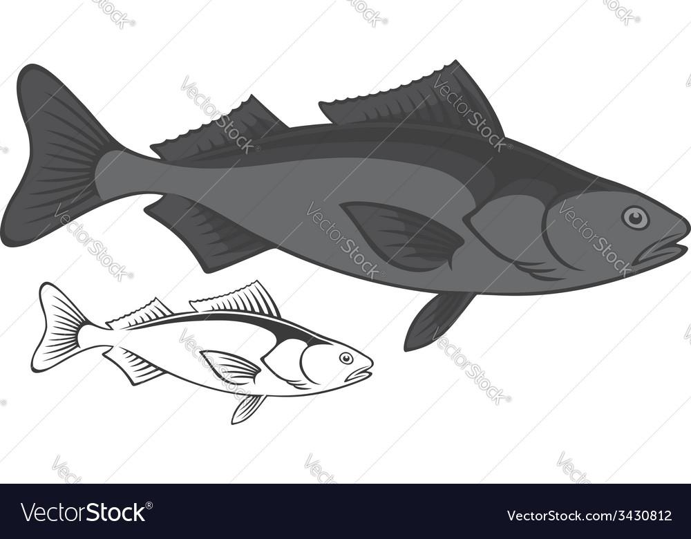 Sablefish vector | Price: 1 Credit (USD $1)