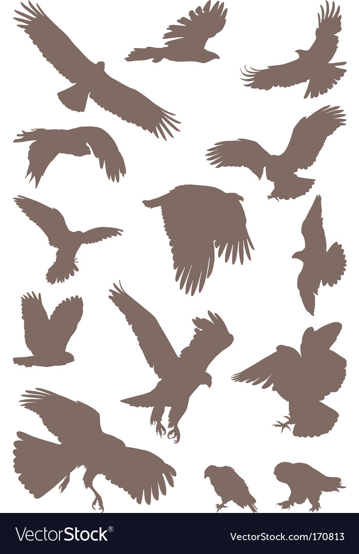 Birds predator vector | Price: 1 Credit (USD $1)