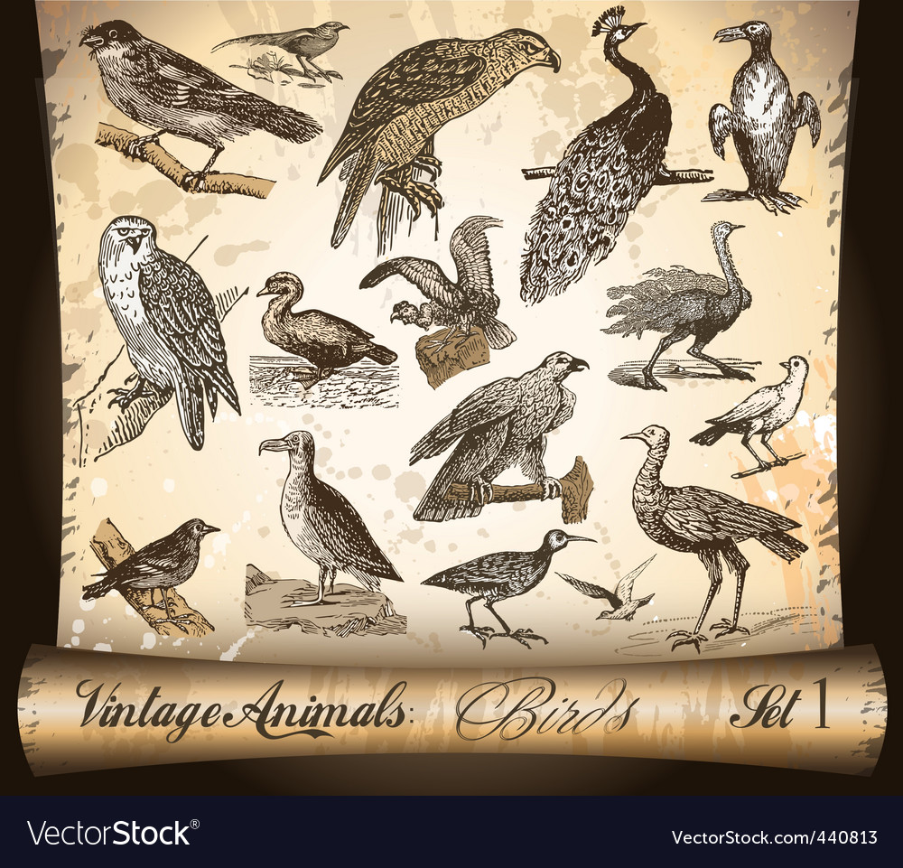 Vintage animals birds vector | Price: 1 Credit (USD $1)