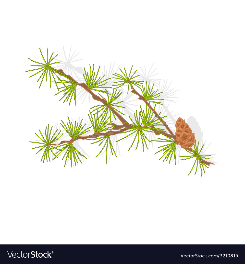 Larch tamarack branch christmas tree vector | Price: 1 Credit (USD $1)