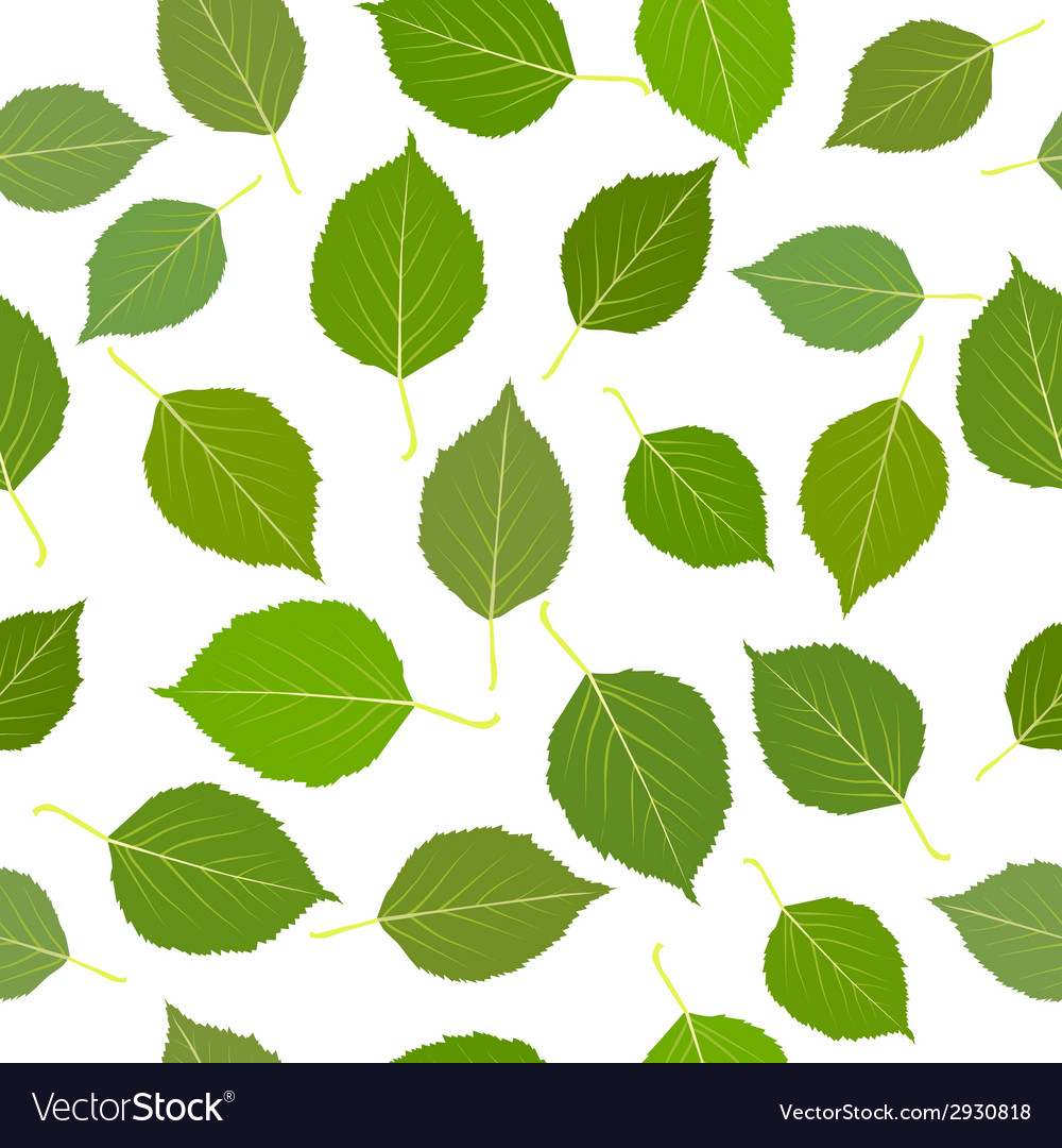 Seamless with green birch leaves vector | Price: 1 Credit (USD $1)