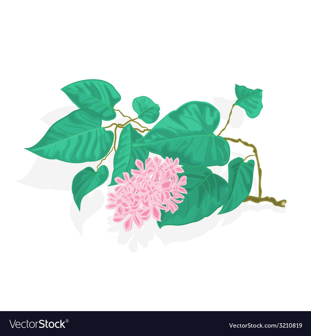 Branch of lilac with flowers species syringa vector | Price: 1 Credit (USD $1)