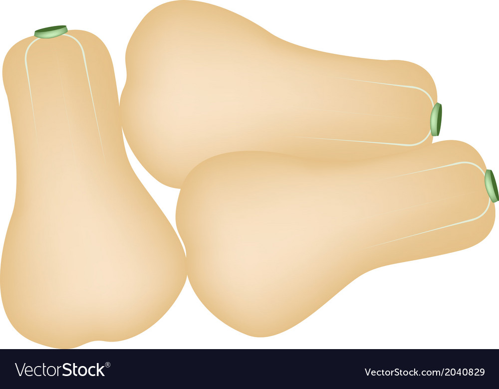 Heap of butternut squashes on a white background vector | Price: 1 Credit (USD $1)
