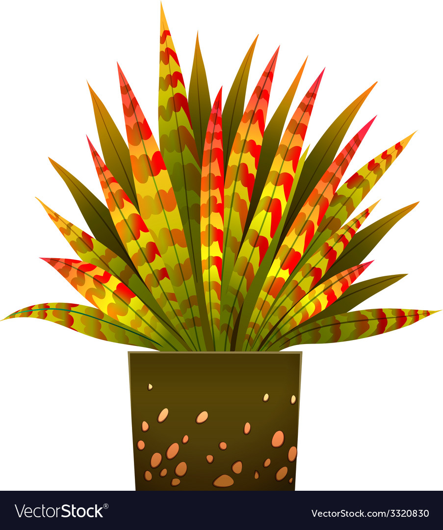 A house plant vector | Price: 1 Credit (USD $1)