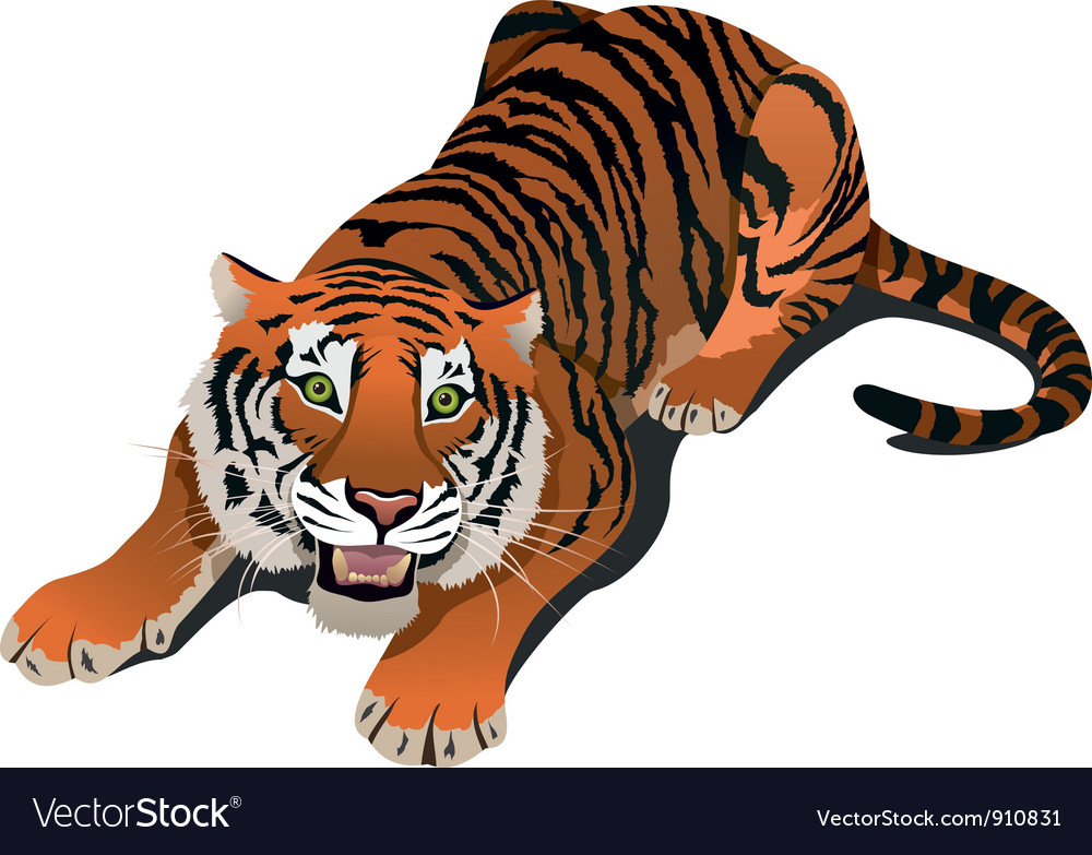 Roaring tiger vector | Price: 3 Credit (USD $3)
