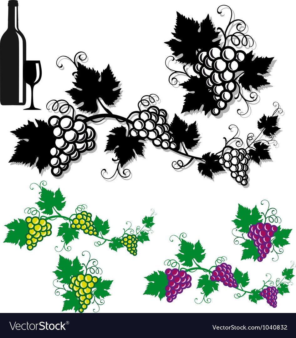 Grapes with vine leaves vector | Price: 1 Credit (USD $1)